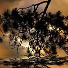 The Branch ! by Elfriede Fulda