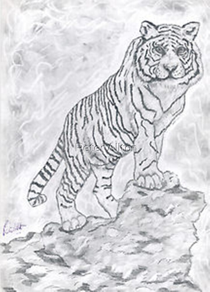 white tiger. by Peter Allton