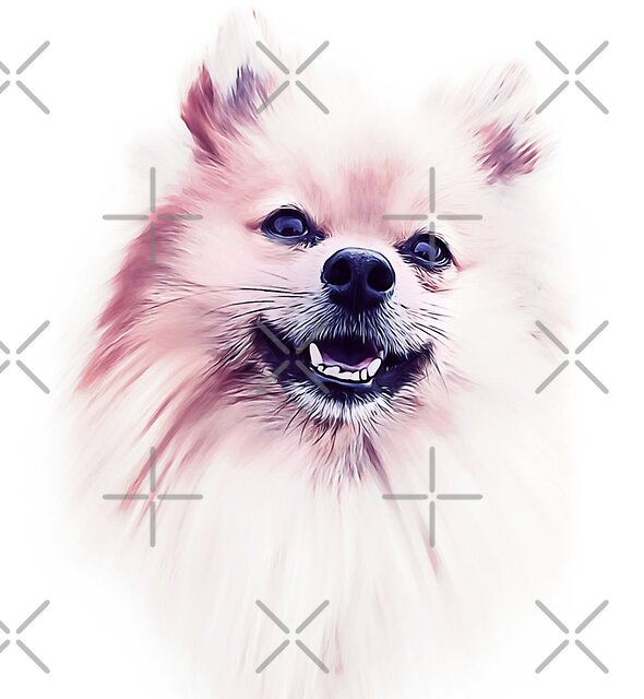 The Smiling Pomeranian  by lovewithfluff
