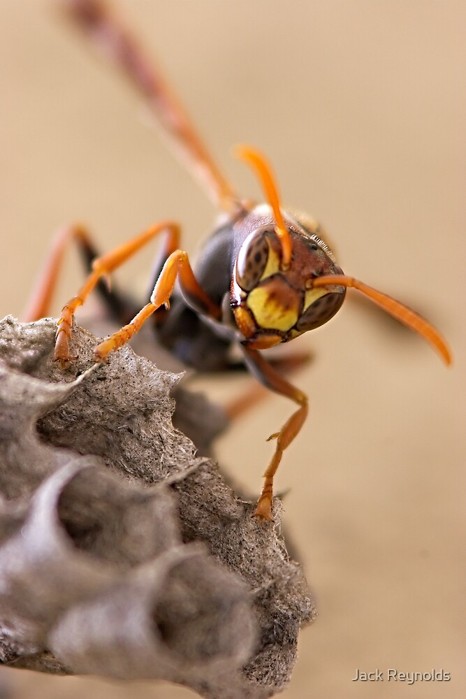 Paper Wasp by Jack Reynolds