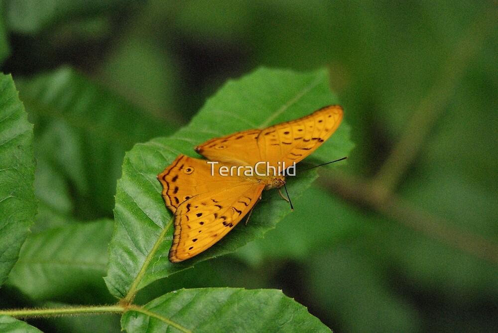 Butterfly III by TerraChild