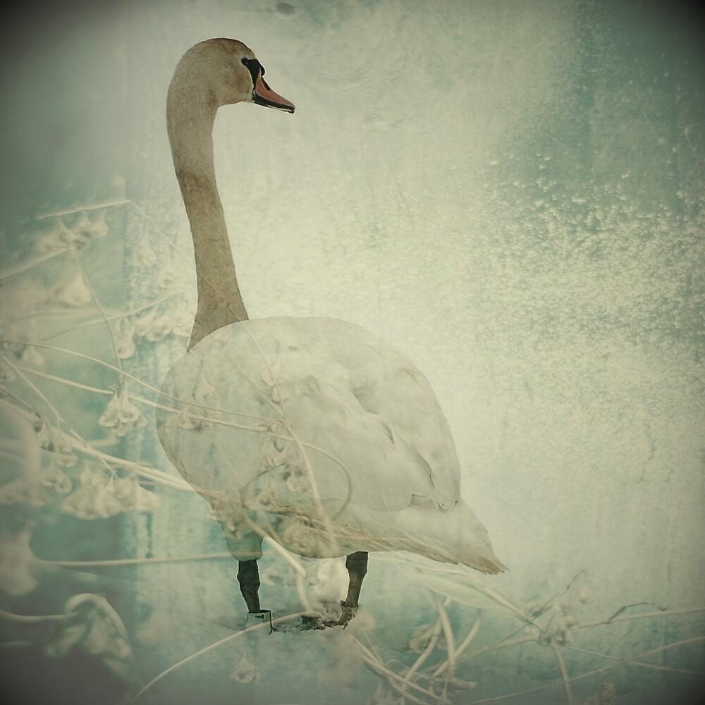 Winter Swan by KarenMcWhirter