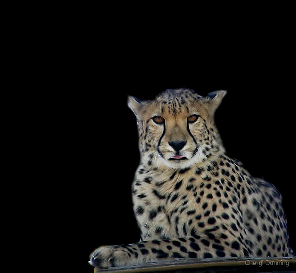 cheetah by Cheryl Dunning