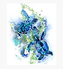 Meeresschildkröten Türkis BLue Design Fotodruck