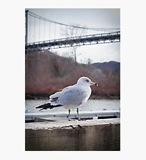 Suspension Bridge Seagull Photographic Print