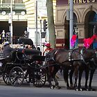 Horse Transport in Melbourne by lezvee