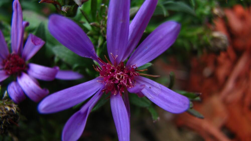 purple flower by JasonBalius