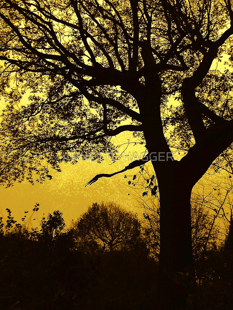 FIDDLEWOOD AS THE SUN GOES DOWN by ANNETTE HAGGER