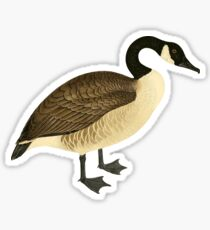Canada Goose Cute Canadian Goose Graphic, Canuck Gift Sticker