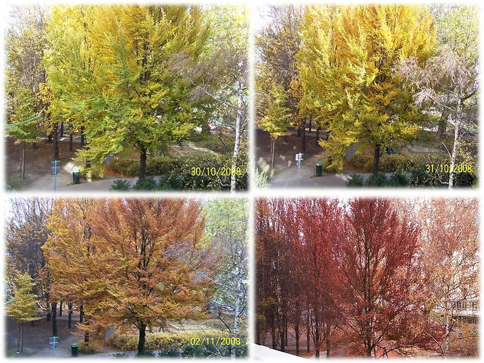 AUTUMN step by step by bogna777