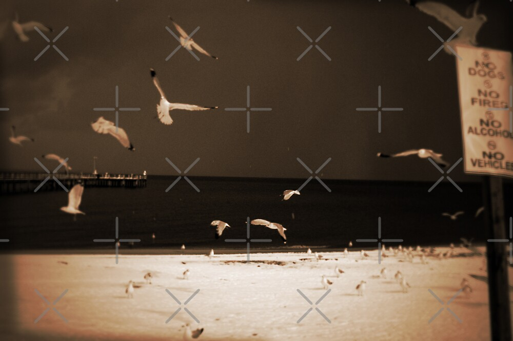 The Birds by Clayton Bruster