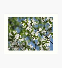 ~Dogwood Blossoms In The Sky~ Art Print