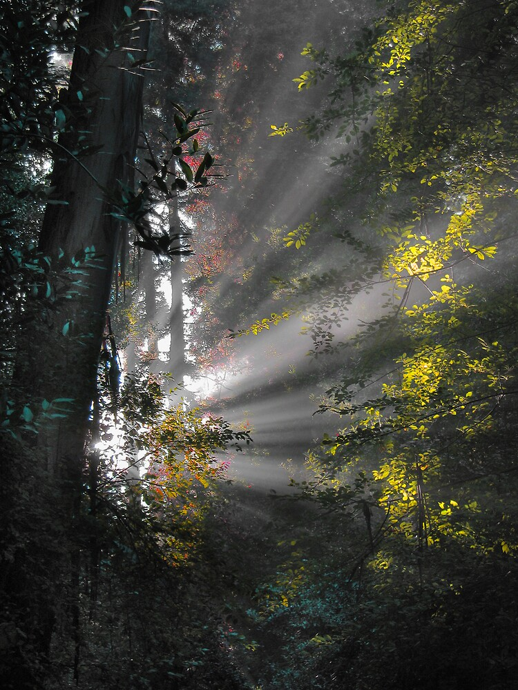 Sunrays II by Gary Pope