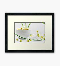Real chamomile still life Framed Print