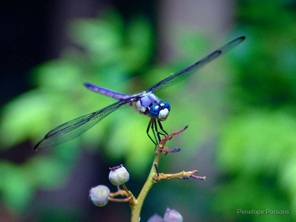 Dialogue With a Dragonfly by Penelope Parsons