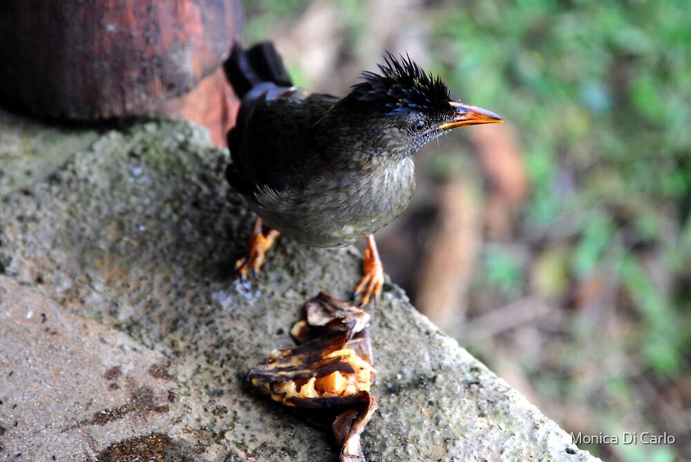 Seychelles's bird eat banana by Monica Di Carlo