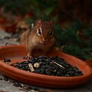 Chipmunk by blew12bandit