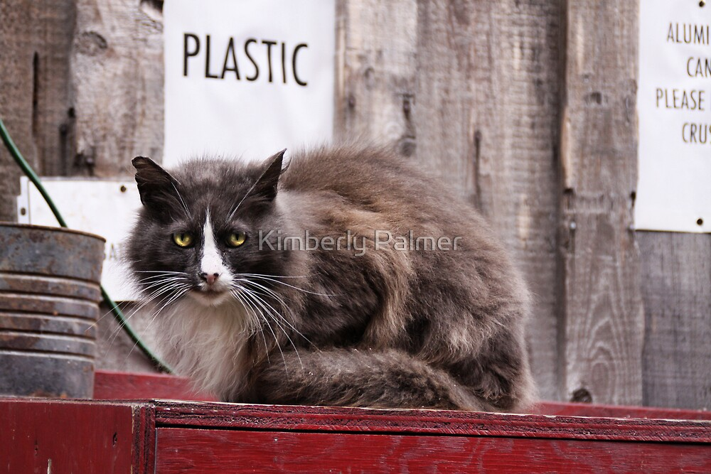 Please recycle by Kimberly Palmer