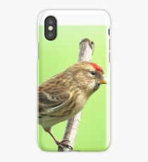 Common Red Poll - Carduelis Flammea iPhone Case/Skin