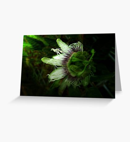 """""""Floating Passion"""" Greeting Card"""