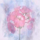 Geranium by Catherine Hamilton-Veal  ©