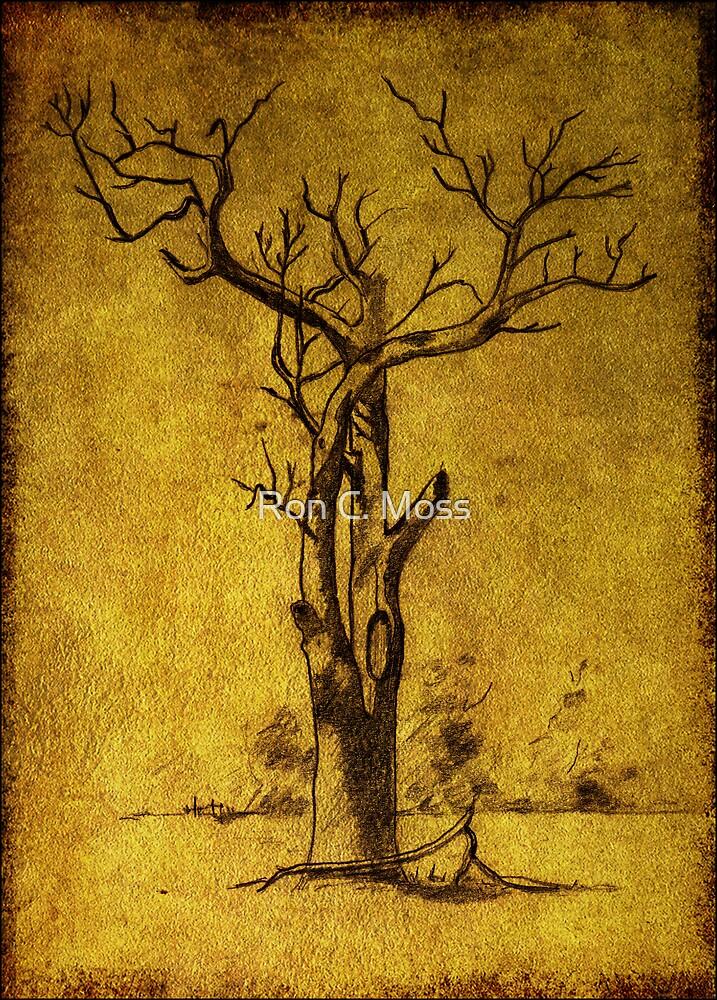dead tree near Ross by Ron C. Moss