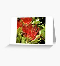 D1G1TAL-M00DZ ~ JUST PHOTOS ~ FLORAL ~ Pohutukawa Flower and Bee by tasmanianartist Greeting Card