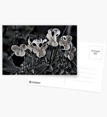 Flowers and Petals Postcards
