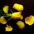 Yellow Rose On Wood by hurmerinta