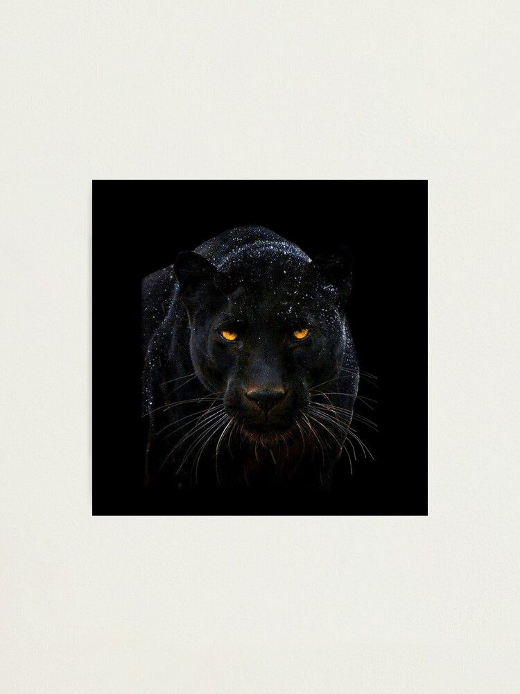 Alternate view of Black Panther Close up  Photographic Print