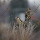 Husband and Wife.... City Sparrows... by Larry Llewellyn