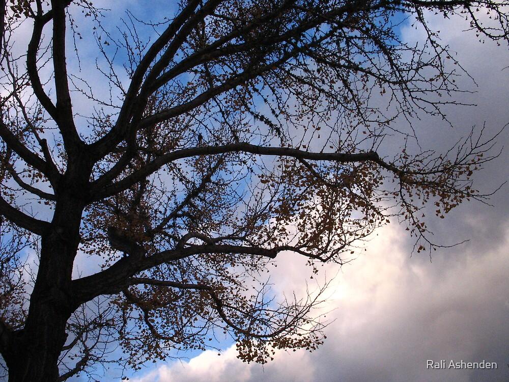 Gloom by Rali Ashenden