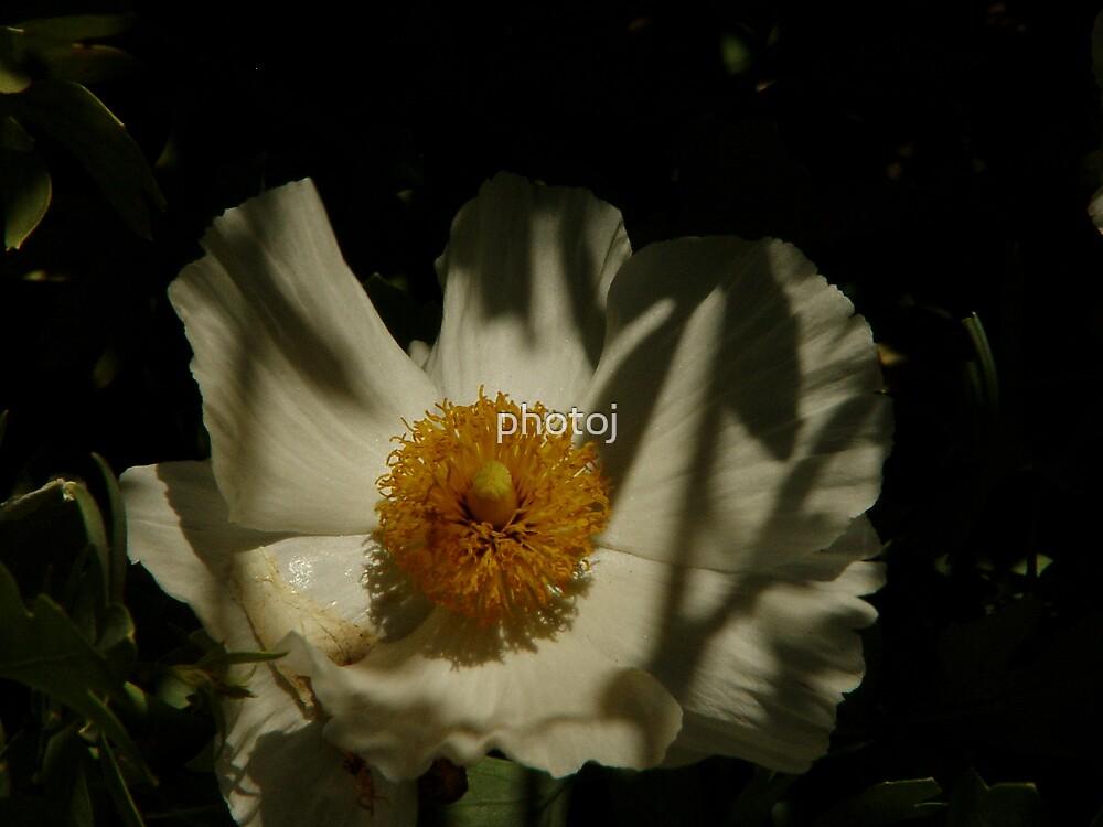 photoj S.A. Botanical Gardens-Flora by photoj