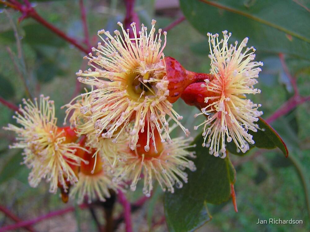 Blossom after Rain by Jan Richardson
