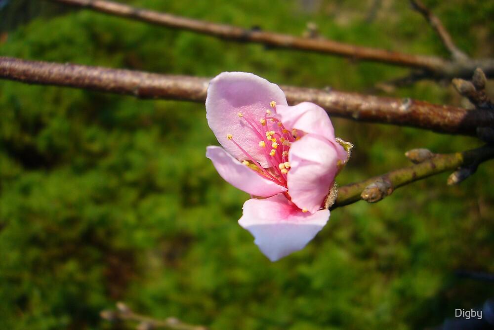 Spring by Digby