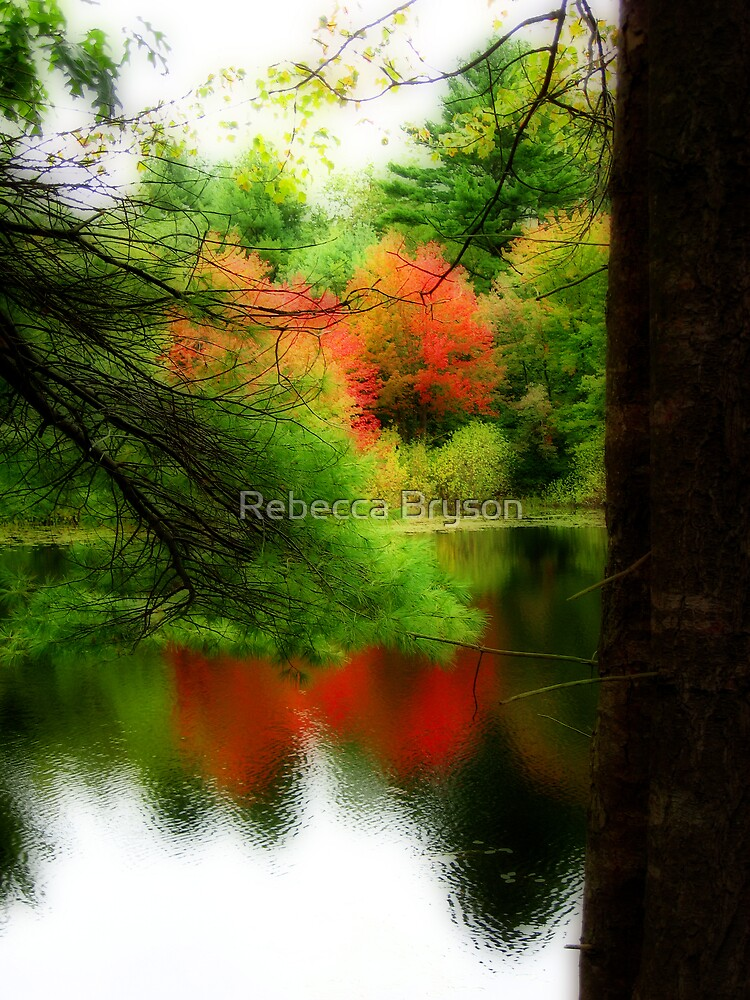 Through the Pines by Rebecca Bryson