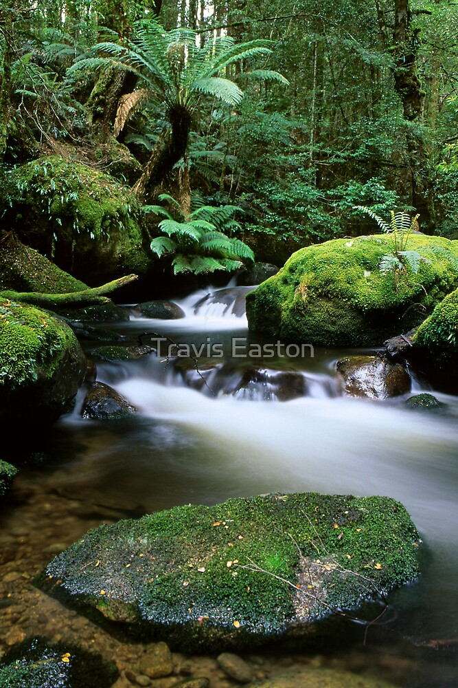 Taggerty River Tranquility by Travis Easton