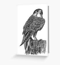 Prairie Falcon [2016] Greeting Card