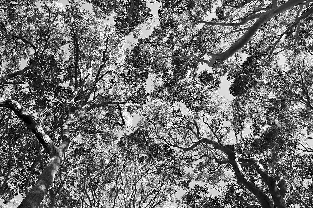 canopy by Elli Schweizer