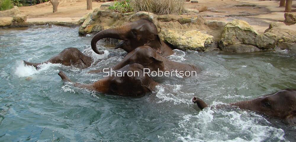 Elephant Races by Sharon Robertson