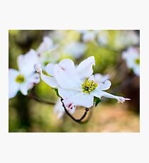 Spring Time Blooms Photographic Print