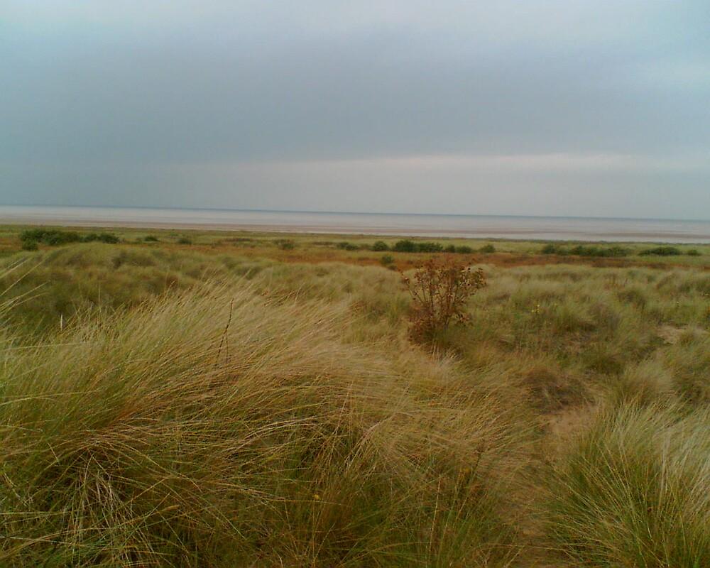 Dune by jobarton