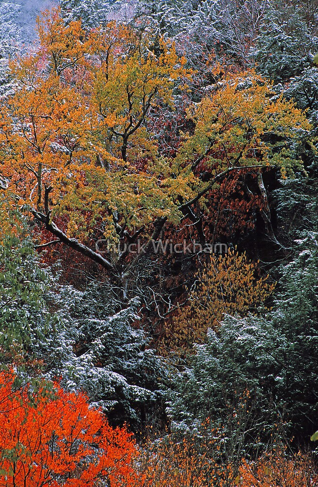 AUTUMN SNOW, GREAT SMOKY MOUNTAINS NP by Chuck Wickham