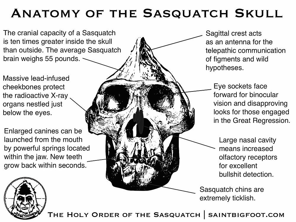 Anatomie des Sasquatch-Schädels\