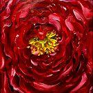Scandulous Ranunculus by Alma Lee
