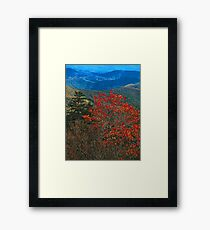 MOUNTAIN ASH, GREAT SMOKY MOUNTAINS NP Framed Print