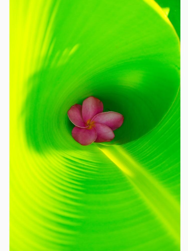 Plumeria innerhalb des Bananen-Blattes von Jettymoon