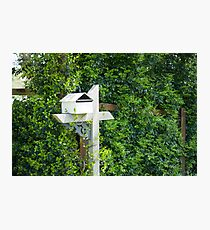 White rural romantic mail box hedge background green Photographic Print