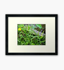 Wildflower and the Lizard Framed Print