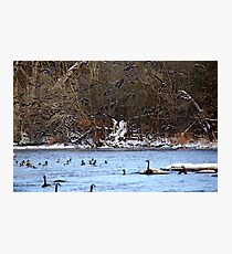 Startled Geese In Flight Photographic Print